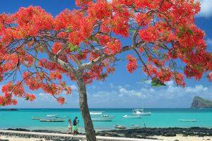Bild von Mauritius + Premium Ocean Delux Zimmer + Halbpension + 7 Tage + Massage + Wein + Eintritt Casela Park + Flug & Transfer = 1194€
