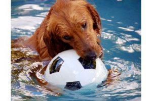 Bild von Hundespielzeug bis zu 60% reduziert