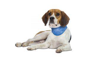 Bild von Schecker Kühl-Halstuch für Hunde