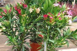 Bild von MEGA Pflanzen Sale bis zu 70% Rabatt schon ab 1,50€