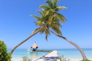 Bild von Malediven zum Dahinschmelzen – Villa auf einer Trauminsel – inkl. Vollpension o. All-inclusive & Delfin-Beobachtungstour = 85€